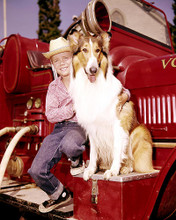 This is an image of 283952 Jon Provost and Lassie Photograph & Poster