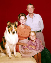 This is an image of 283955 Jon Provost and Lassie Photograph & Poster