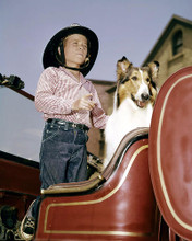 This is an image of 283956 Jon Provost and Lassie Photograph & Poster