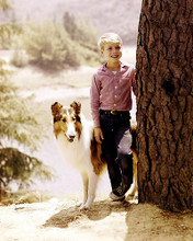 This is an image of 283950 Jon Provost and Lassie Photograph & Poster