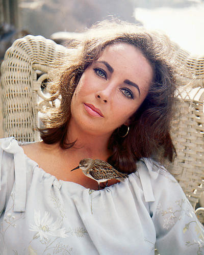 This is an image of 248342 Elizabeth Taylor Photograph & Poster