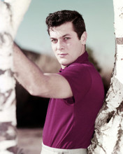 This is an image of Prints & Posters of Tony Curtis 298844