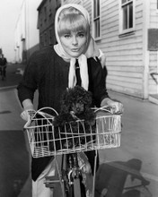 This is an image of Prints & Posters of Elke Sommer 104136