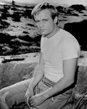 This is an image of Prints & Posters of David McCallum 104315