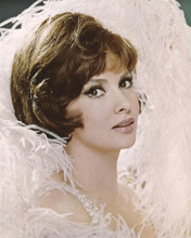 This is an image of Prints & Posters of Gina Lollobrigida 202127