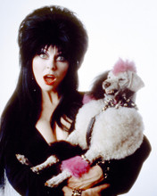 This is an image of Prints & Posters of Elvira 202182