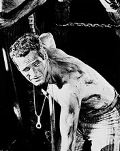 This is an image of 19033 Paul Newman Photograph & Poster
