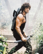 This is an image of 22274 Sylvester Stallone Photograph & Poster