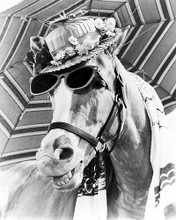 This is an image of Photograph & Poster of Mr.Ed 100834