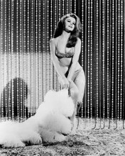 This is an image of Photograph & Poster of Ann-Margret 101712