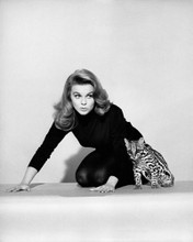 This is an image of Photograph & Poster of Ann-Margret 101766