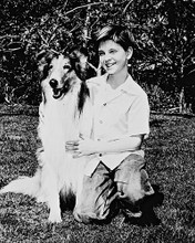 This is an image of 160082 Lassie Photograph & Poster