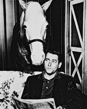 This is an image of 161934 Mr.Ed Photograph & Poster