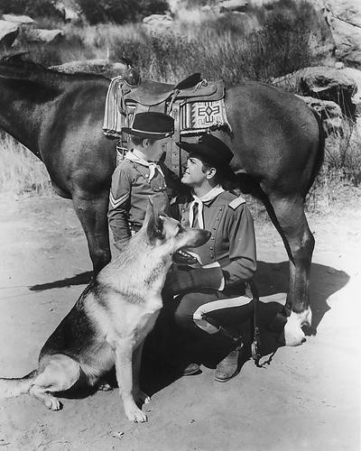 This is an image of 171103 Rin Tin Tin Photograph & Poster