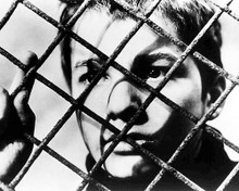 This is an image of 196858 The 400 Blows Photograph & Poster