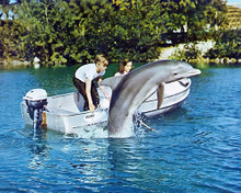 This is an image of 281477 Flipper Photograph & Poster