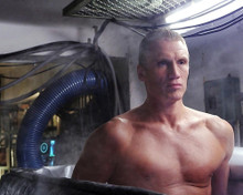 This is an image of 281533 Dolph Lundgren Photograph & Poster