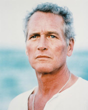 This is an image of 214128 Paul Newman Photograph & Poster