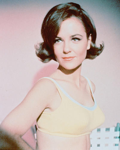 This is an image of 235896 Shelley Fabares Photograph & Poster