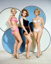 This is an image of 252377 Shelley Fabares Photograph & Poster