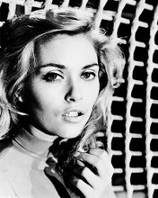 This is an image of 169164 Alexandra Bastedo Photograph & Poster