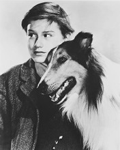 This is an image of 169229 Lassie Photograph & Poster