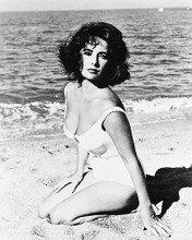 This is an image of 169844 Elizabeth Taylor Photograph & Poster