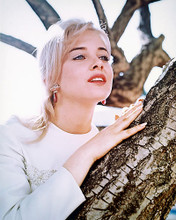 This is an image of 258635 Sue Lyon Photograph & Poster