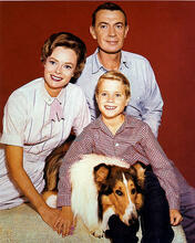 This is an image of 274616 Lassie Photograph & Poster