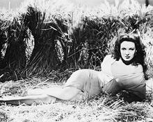 This is an image of 167962 Linda Darnell Photograph & Poster