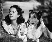 This is an image of 175209 Elizabeth Taylor Photograph & Poster