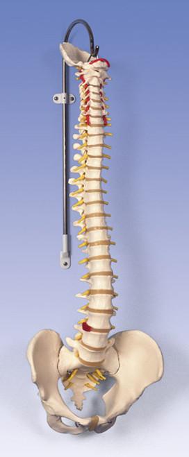 Classic Flexible Spine