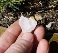 Japan Law quartz (1339432667)