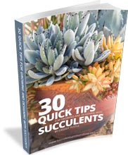 a-quick-and-simple-way-to-learn-the-basics-about-growing-succulents-.jpg