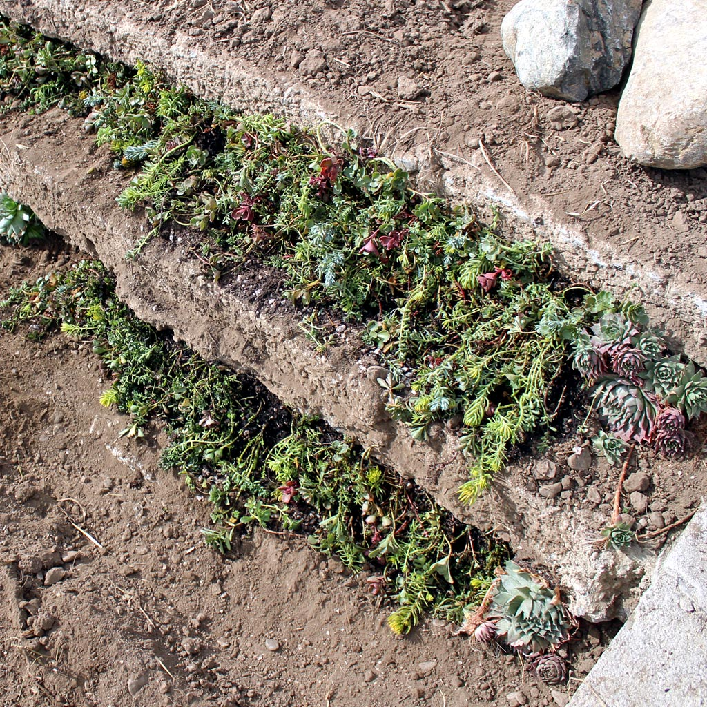 ground-cover-tile-5.jpg