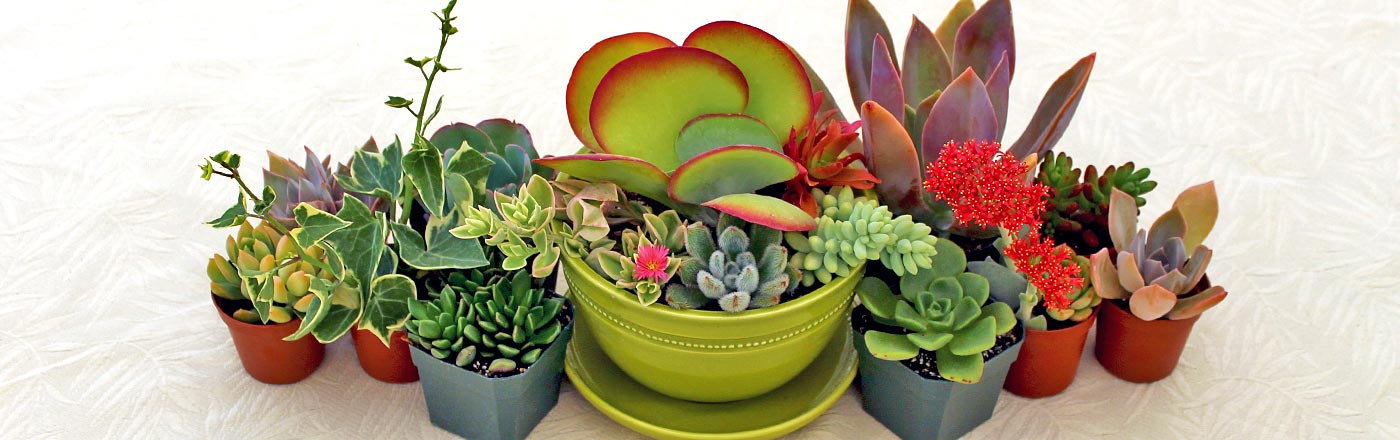 Garden Design Garden Design with Succulent Plants on Pinterest