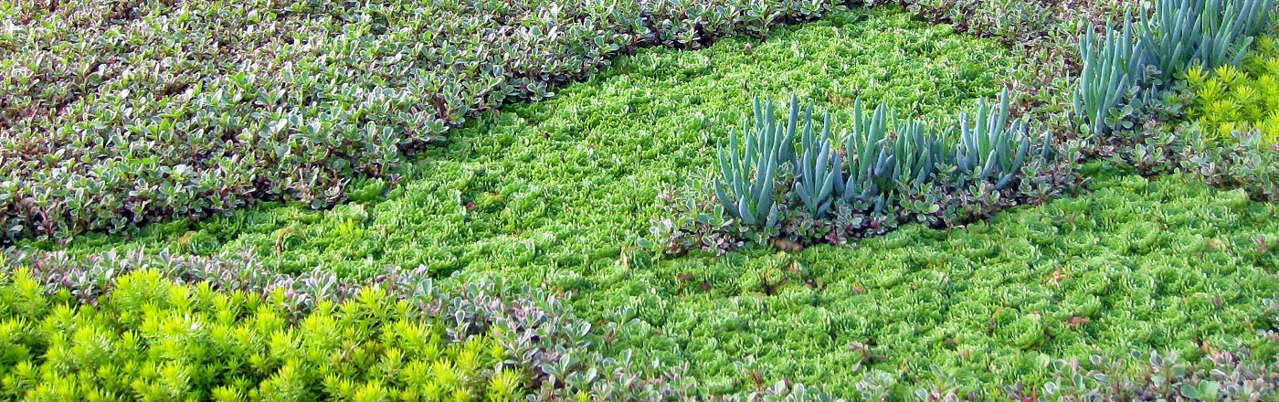 Living Wall & Green Roof Succulents | Mountain Crest Gardens™