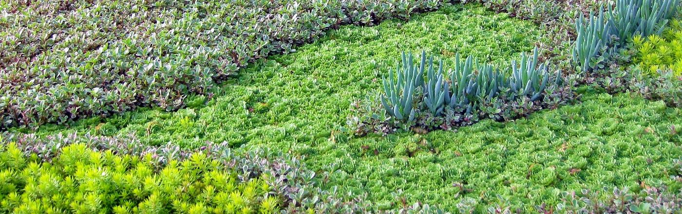 Living Wall & Green Roof | Mountain Crest Gardens