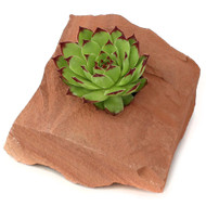 "Desert Rock Planter Pot 4"" x 6"" - With Sempervivum 'Royanum'"