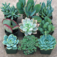 Blue Succulent Collection - Large (9)