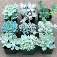 Silver Succulent Collection