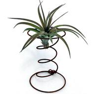 Air Plant Accessory - Short Hour Glass