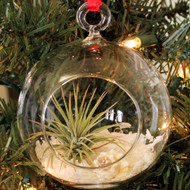 Air Plant - Tillandsia Kit - Christmas Tree Ornament