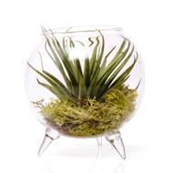 "Terrarium Single Plant Glass 3.5"" x 3.5"""