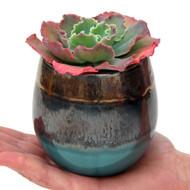 Planted Modani Pot