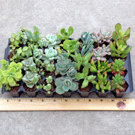 Indoor Plug Tray - 14 varieties