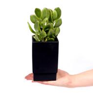 """Zen Pot Black 3.5"""" x 6"""" - Size Reference"""