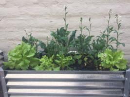 Growing Organic