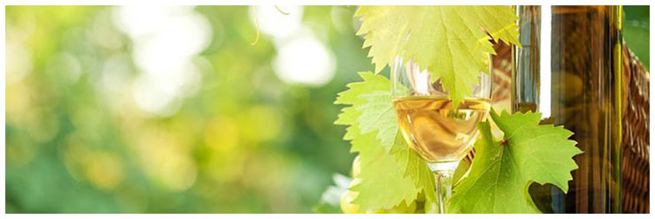 Sweet white wine bottle, young vine and bunch of grapes against green spring background.