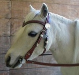 Western Riding Bridle